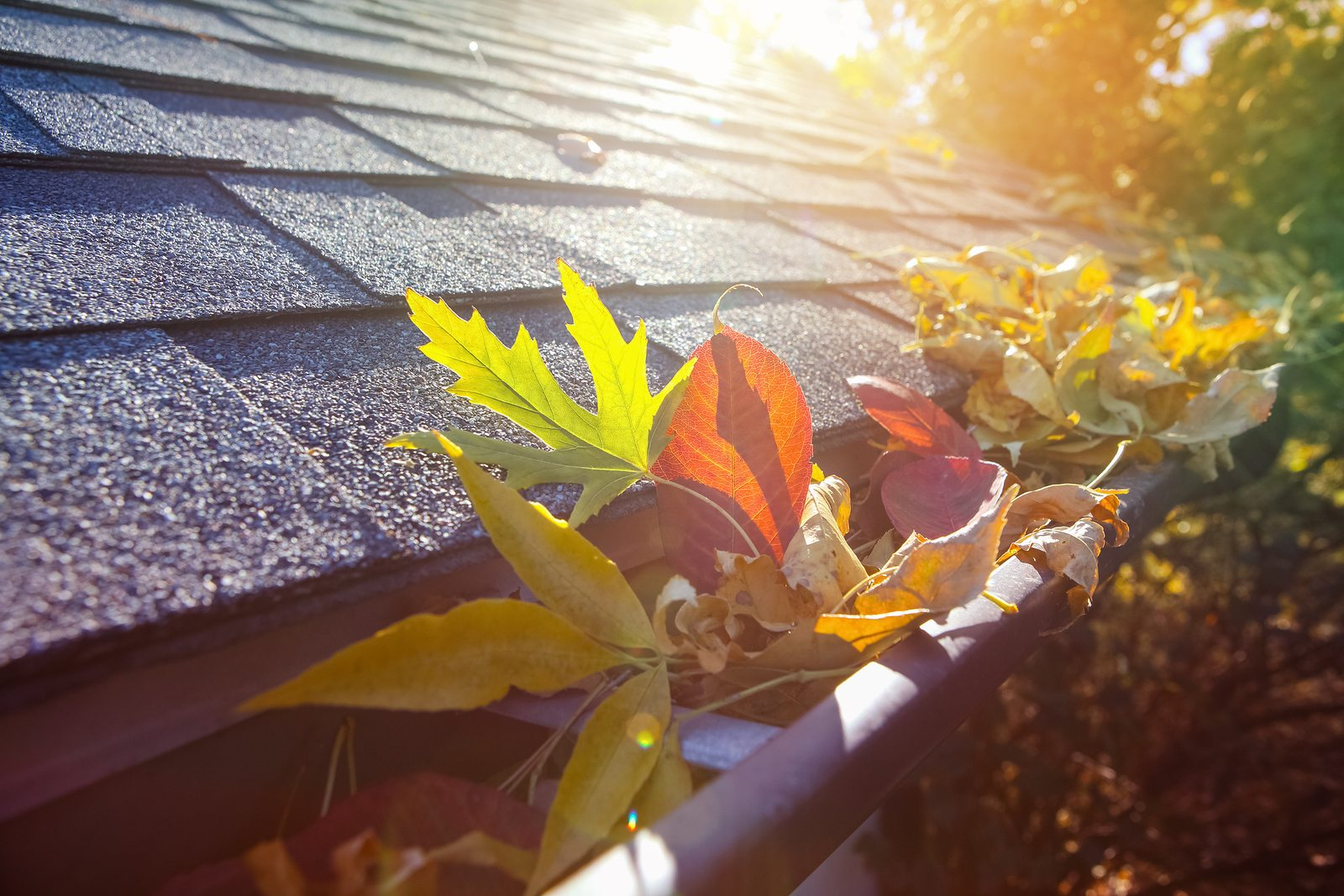 When How To Clean Your Gutters